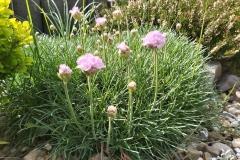 kwiaty-008-Kopiowanie