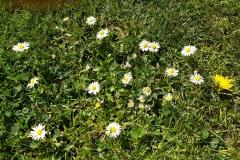 kwiaty-025-Kopiowanie