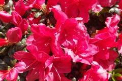 kwiaty-028-Kopiowanie