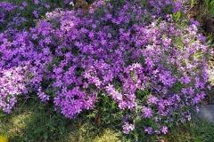 kwiaty-030-Kopiowanie
